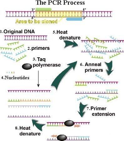http://kem-en-tec-nordic.com/wp-content/uploads/2013/09/I11-50-PCR.jpg