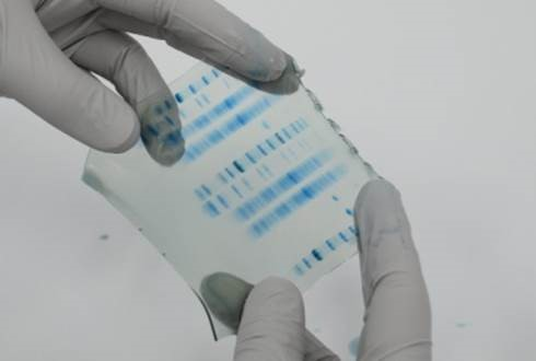 RunBlue-SDS-PAGE-gels