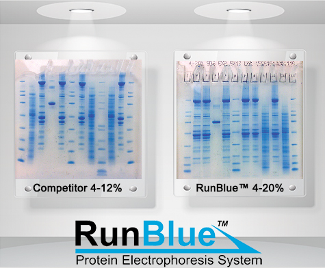 RunBlue-protein-stain-comparison