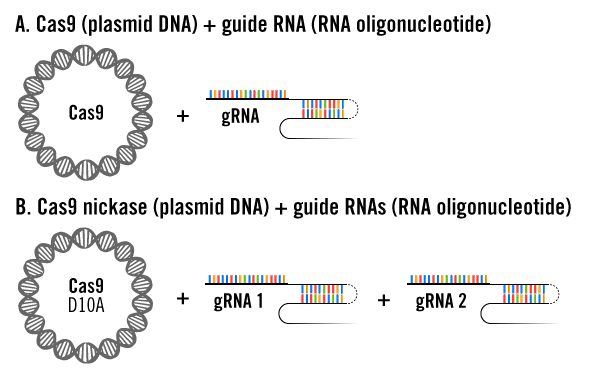 crispr-cas9-plasmid-and-guide-rna-delivery-approaches
