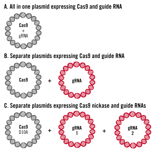 crispr-cas9-plasmid-delivery-approaches