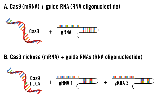 crispr-mrna-and-grna-delivery-approaches